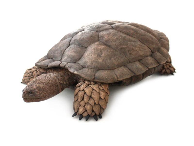 Aragochersis, una nueva tortuga primitiva del Cretácico Inferior de España.