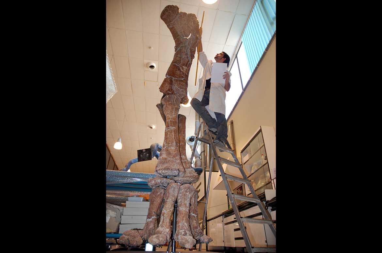 Museo peleontológico